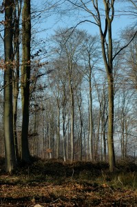 Un patrimoine forestier remarquable