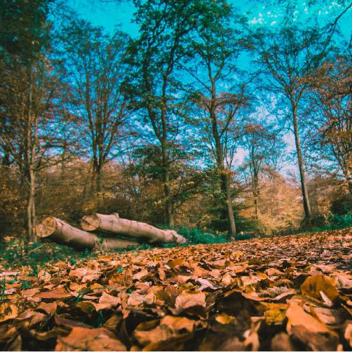 Sortie en forêt à la découverte des pics